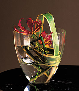 Gloriosa Under Glass